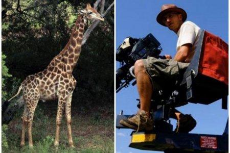 Zürafə çəkiliş zamanı rejissoru öldürdü