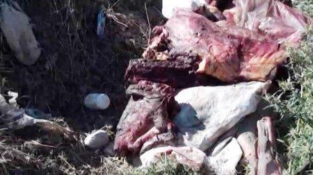 Ukraynadan Azərbaycana külli miqdarda at əti idxalının qarşısı alındı