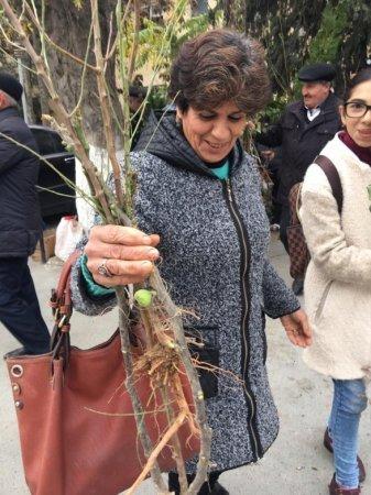 Azərbaycanda kütləvi aksiya: on minlərlə ağac əkildi