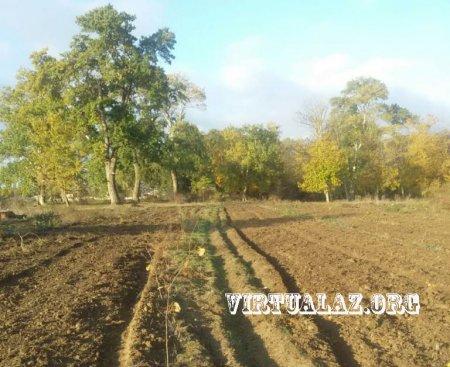 Şahin Məmmədov prezidentin çağırışından ruhlanıb 1 hektar fındıq bağı saldı